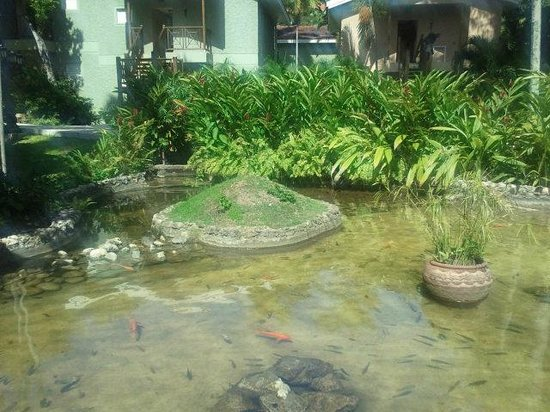 Sandals Ochi Beach Resort: Beautiful Pond with Fish and Turtles