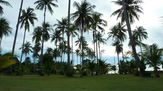 Chang Park Resort & Spa: Снова пальмы