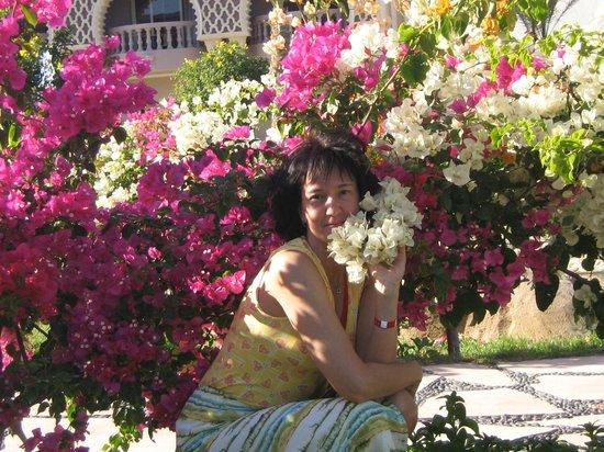 SENTIDO Mamlouk Palace Resort : Вот такой январь!
