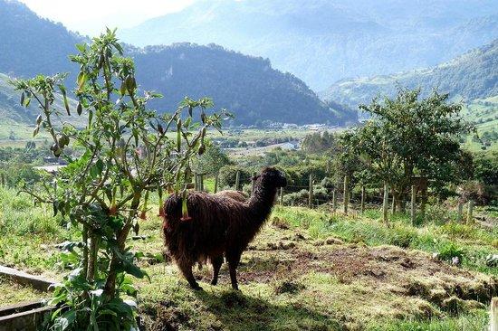 Termas de Papallacta: just behind the spa
