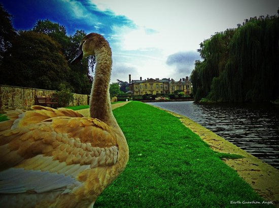 Coombe Abbey Hotel : Beautiful views and plenty of wildlife