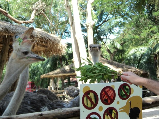 Hmmm not sure what this is?? - Picture of Khao Kheow Open Zoo, Si Racha - Tri...