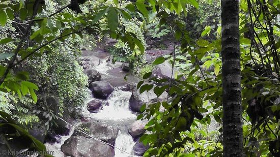 Rambala Jungle Lodge : The river that runs through the property