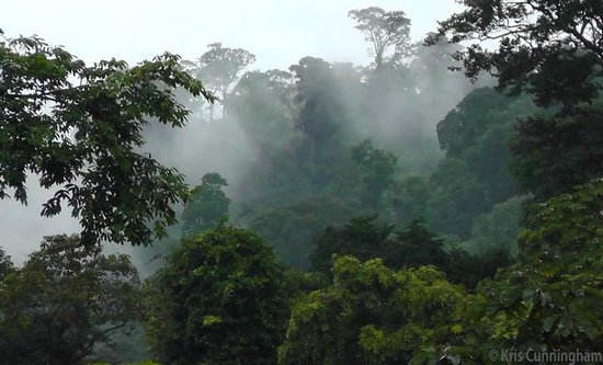 Rambala Jungle Lodge : Clouds and mist float through the trees.