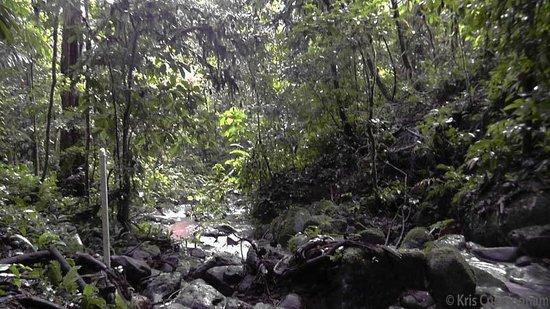 Rambala Jungle Lodge : Walking in the jungle