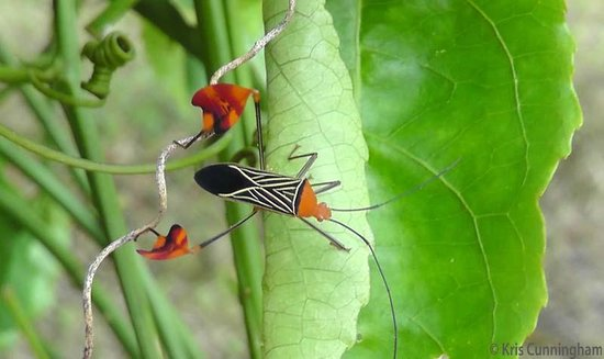 Rambala Jungle Lodge: A really cool bug