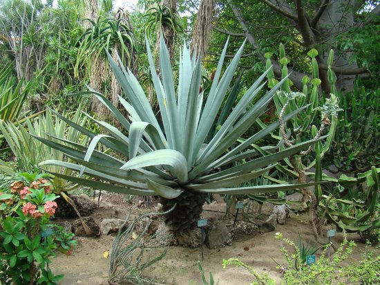 Jardin d'Eden : plante