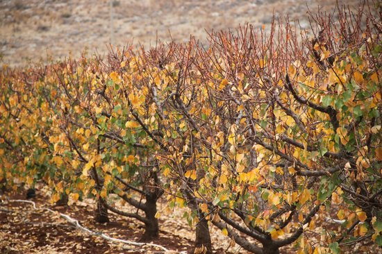 Bayit Bateva : Beautiful Orchard