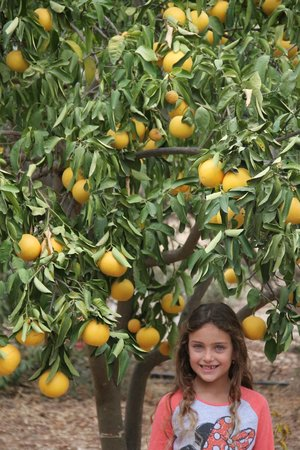 Bayit Bateva: citrus fruit every were