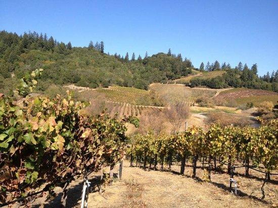 Michel-Schlumberger Wines: Vineyard meets Redwoods