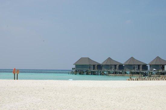 Kuredu Island Resort & Spa : Остров