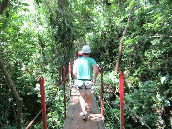 Calico Jack's Belize Jungle Canopy and Zip Lining: Trekking through the jungle from line to line