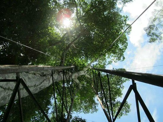 "Calico Jack's Belize Jungle Canopy and Zip Lining: Looking up the ""Jungle Elevator"" that takes you to the last run"