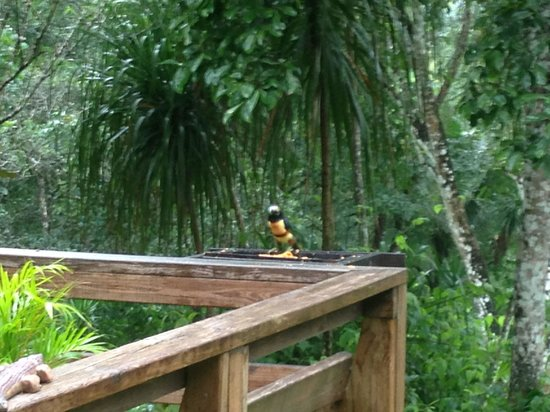 Crystal Paradise Resort: Almost a Toucan...