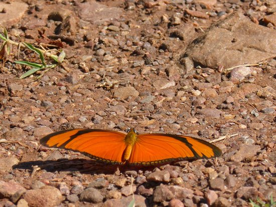 Ecoposada del Estero: fabulous mirrors butterfly one of many -