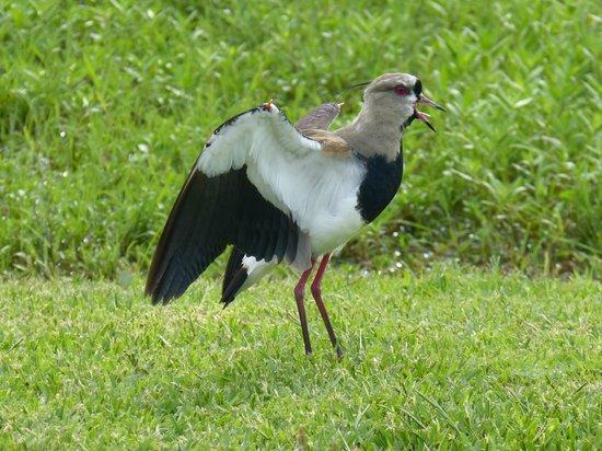 Ecoposada del Estero: birds and behaviour from your hammock!