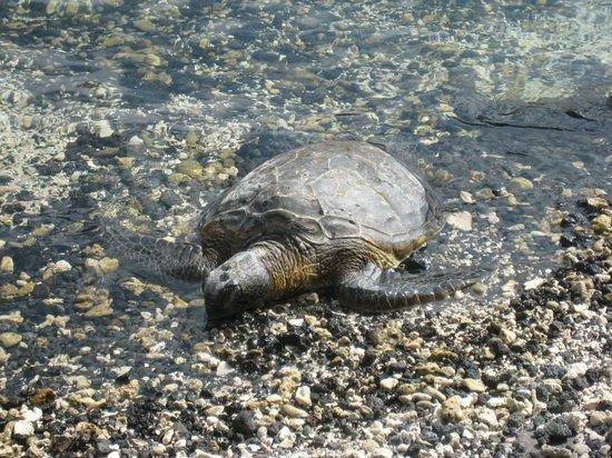 Hilton Waikoloa Village: kids loved all the animals and sea life