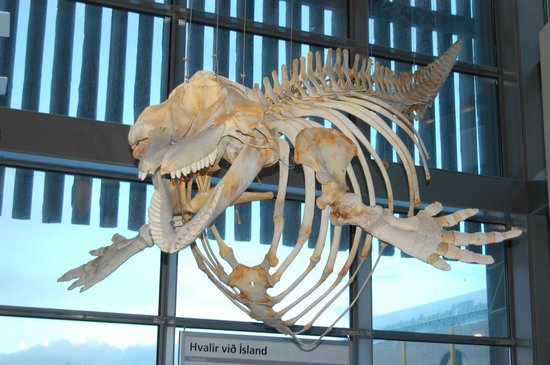 Natural History Museum of Kopavogur