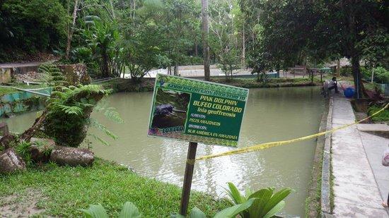 Quistacocha Zoo: Amazonas-Delfin-Becken wie ein schmutziger Tümpel