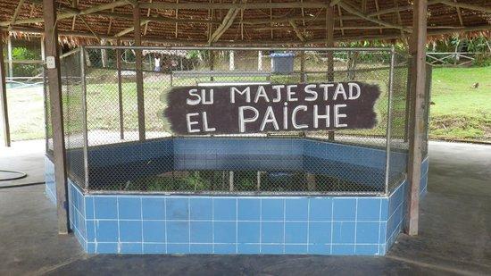 """Quistacocha Zoo: """"Majestät"""" in winzigem Becken mit kaum Wasser"""