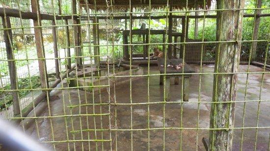 Quistacocha Zoo: trister Puma-Käfig