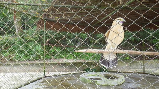Quistacocha Zoo: trister Vogelkäfig mit zwei Ästen