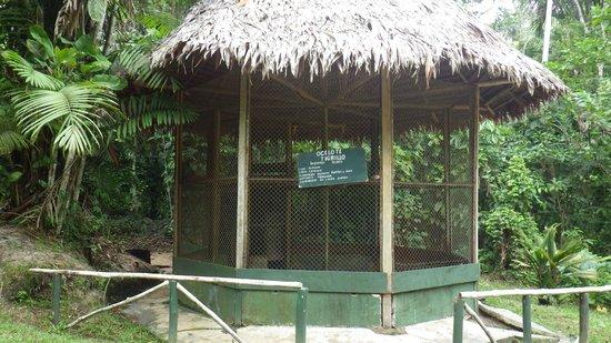 Quistacocha Zoo: winziger Ozelot-Käfig!