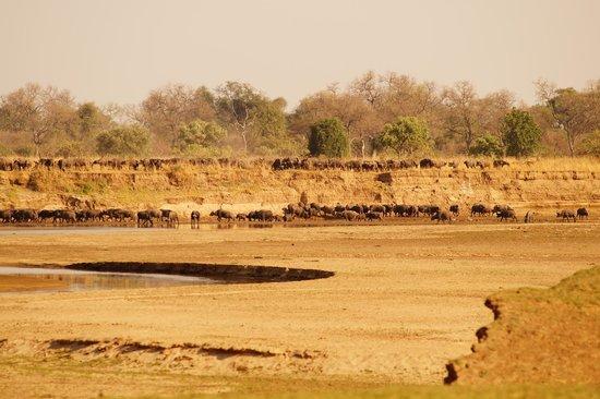 Zikomo Safari Camp: 9