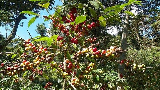 Cooperativa La Voz Que Clama En El Desierto: Coffee