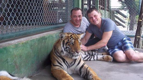 Tiger Kingdom: Here kitty kitty...
