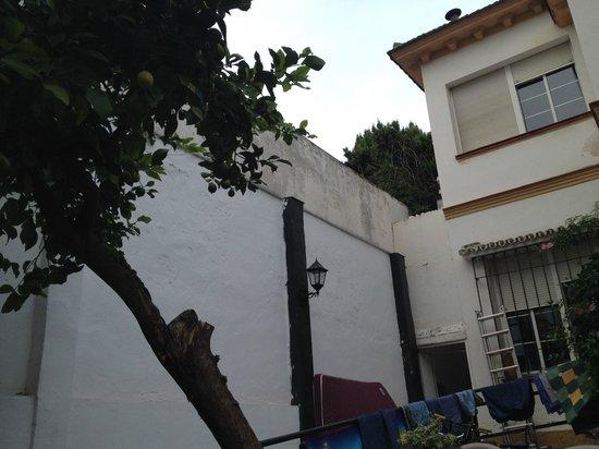 Casa Babylon Backpackers: garden of the house