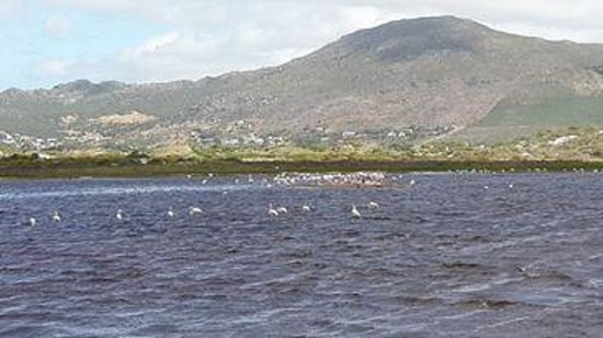 Noordhoek, Sudáfrica: Flamingos in the lagoon