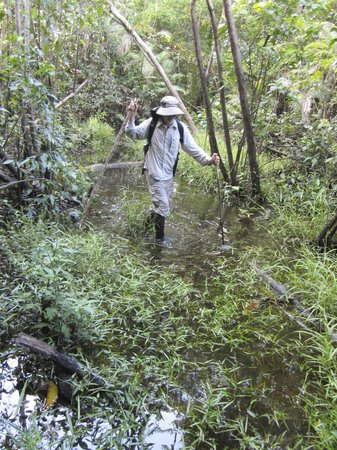 Amazonia Expeditions' Tahuayo Lodge: Jungle walk