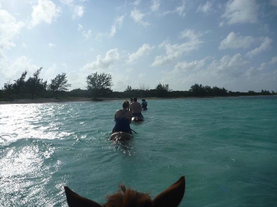 Spirit of the West : swimming with the horses