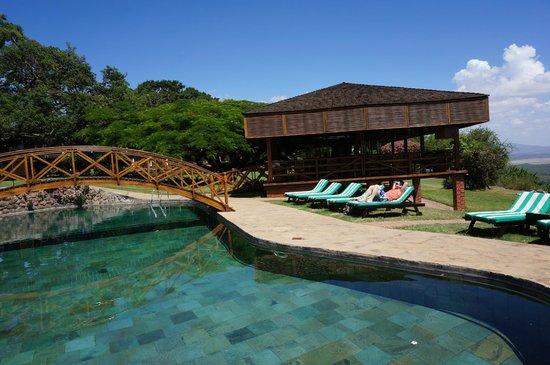 Lake Manyara Hotel: Pool and Bar