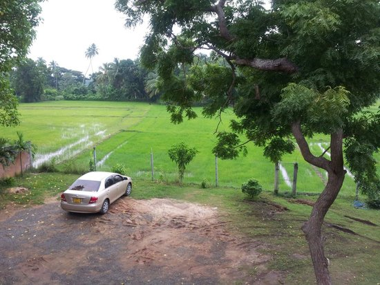 Owin Rose Hotel: Overlooking paddy field.