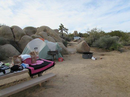 Jumbo Rocks Campground : campground