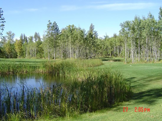 Wildwedge Golf, Mini Golf and Maze : Golf Course