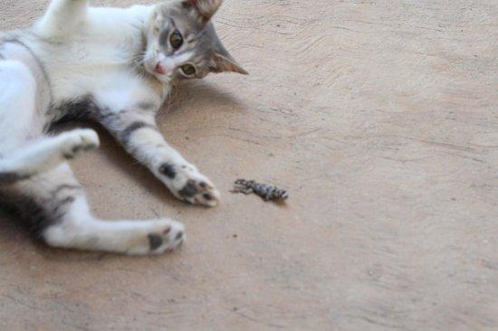 Bahia de la Luna: el travieso gato del hotel
