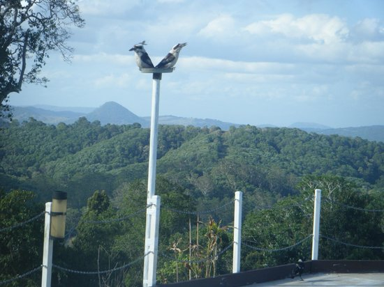 Cooroy Country Cottages: Feeding the Birds