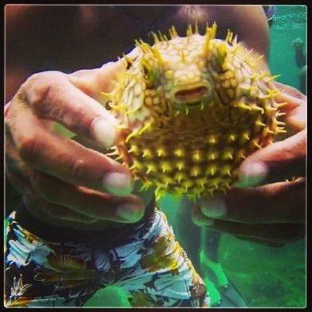Xtabi Resort: Cute little guy! We found him when we were snorkelling !