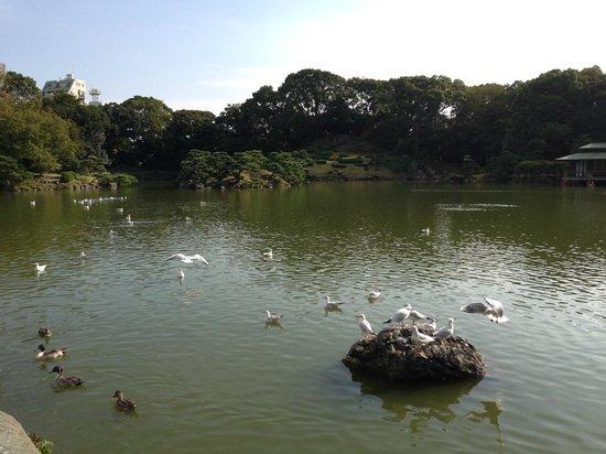 Kiyosumi Teien: Kiyosumi Garden