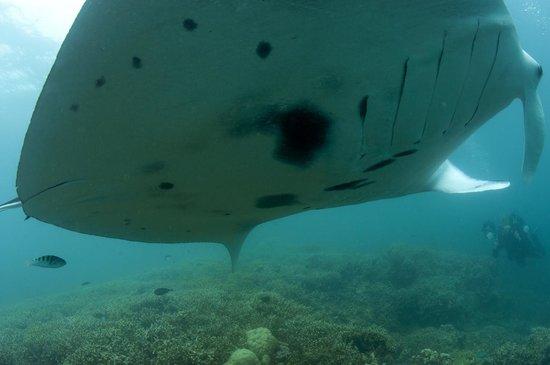 Manta Ray Bay Resort: close flyby
