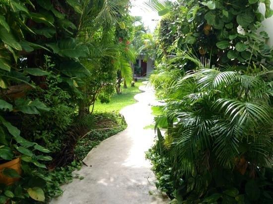 Hostel el Meson de Tulum: ingresso al patio
