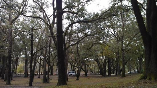 Suwannee River Rendezvous Resort & Campground: View of the gorgeous campground trees