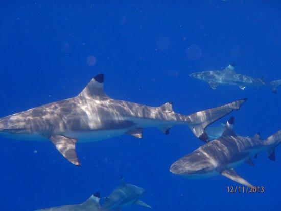 Bora Dream Pictures & Lagoon Tours : blacktip