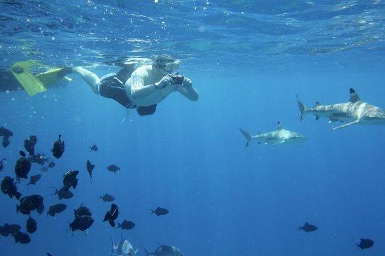 Bora Dream Pictures & Lagoon Tours : sneaky sharks