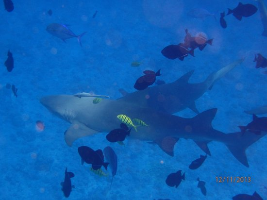 Bora Dream Pictures & Lagoon Tours : getting a bit too close