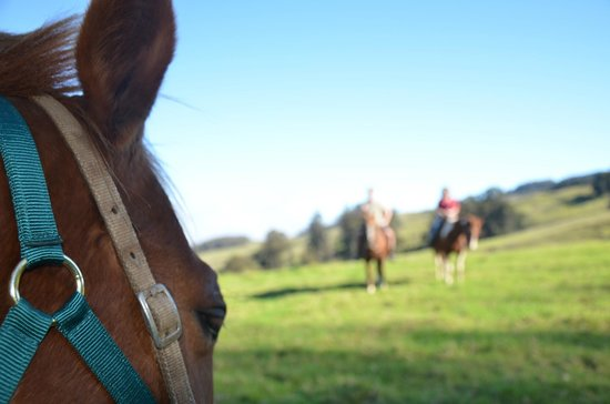 Pony Express Tours: Ranch Tour