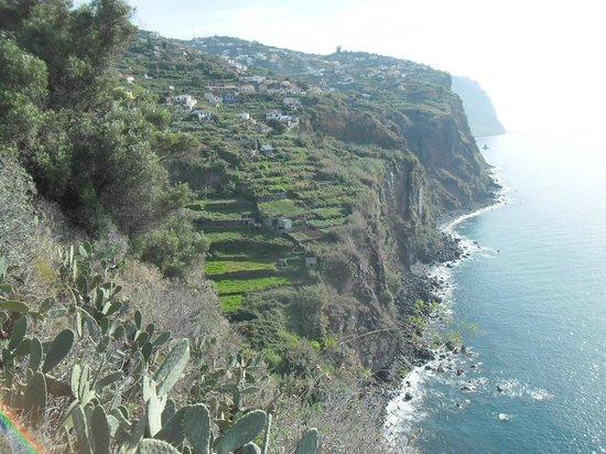 Daniel Madeira Taxis : Funchal Coastline